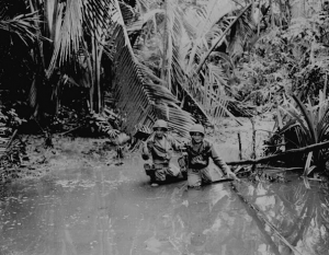 Guadalcanal Jungle